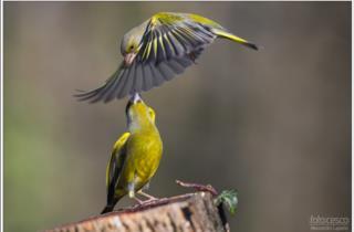natura-animali-friuli_foto Alessandro Laporta