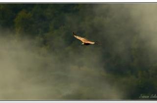 grifone-natura-friuli_foto di Franco Sala