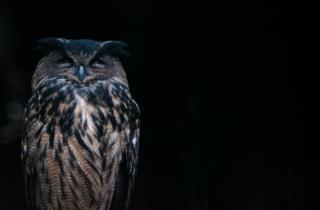 gufo-reale-natura-friuli_foto di Marco Giordano